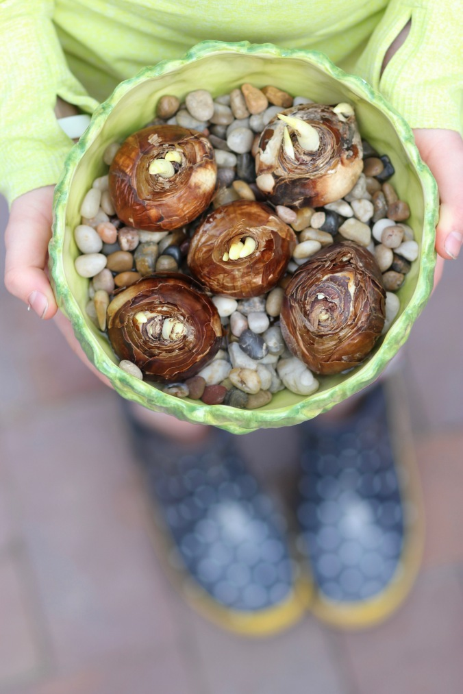 Forcing Bulbs Indoors; a great project for kids and they'll be blooming just in time for Easter!